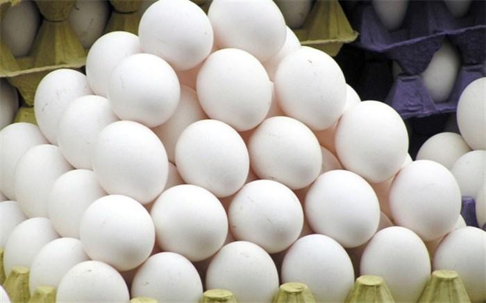 عرضه تخم مرغ بصورت بسته بندی شده اجباری می گردد
